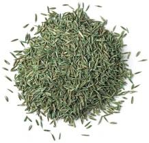Grass Seed, Overseeding,